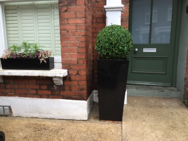 Hampstead Garden makeover After. A healthy new Buxus ball in tall poly mix planter with a couple of simple window boxes to match