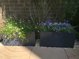 NW6 Garden After